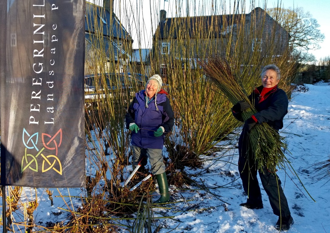 Write-up from Whitton Willow Plot